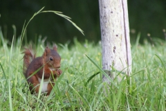 There is lots of wildlife at Les Taloches including red squirrels and deer