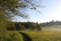 Paths are mown through the meadow taking you into our Woodlands - perfect to stroll through on a hot summers day.